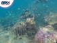Snorkeling Karimunjawa 02